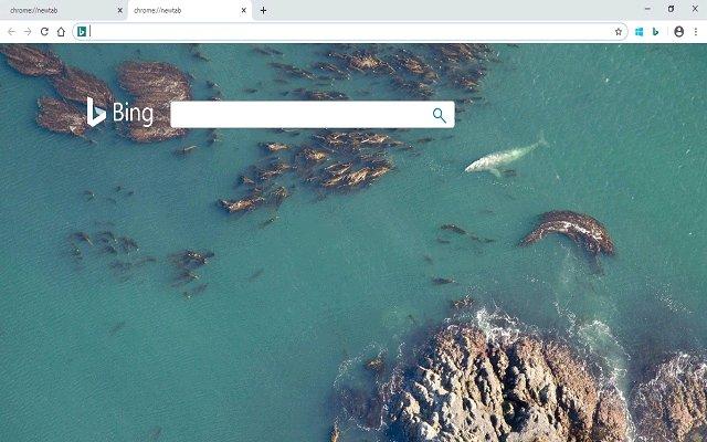 Bing New Tab 必应新标签页的使用截图[1]